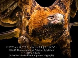 Eagle_Annette_Marner_A